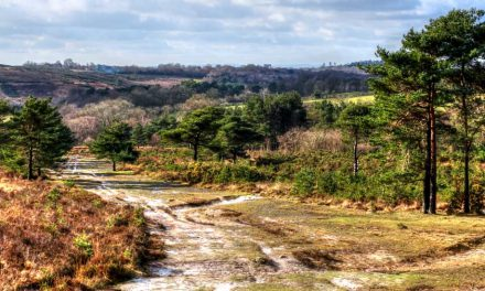 What makes Ashdown Forest unique?