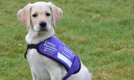 Volunteers needed in Hailsham for Canine Partners