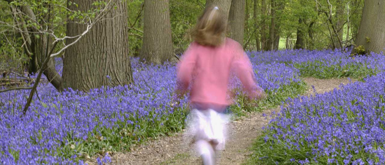 Step into a beautiful blue spring in National Trust bluebell woods