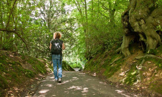 Walking Festival puts High Weald landscape in the spotlight