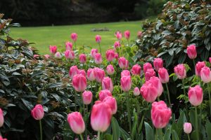 Bobbing Tulips at Pashley Manor Gardens by Henry Hemming (flickr)