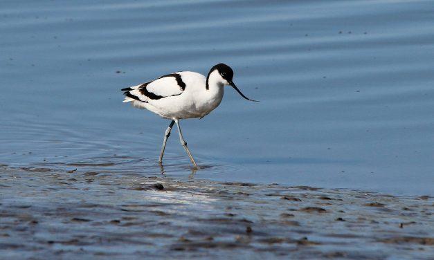 Rare bird makes successful East Sussex comeback