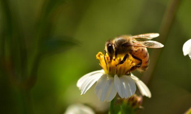 Create a wildlife haven in your garden