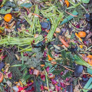 A compost pile can create a wildlife haven for worms.