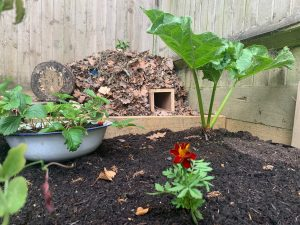 Vegetable garden with complete hedgehog home at the end