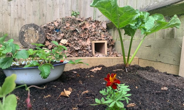 How to build a home for hedgehogs