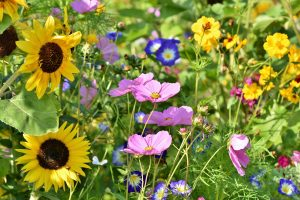 Create a wildlife haven in your garden by letting weeds and flowers grow.