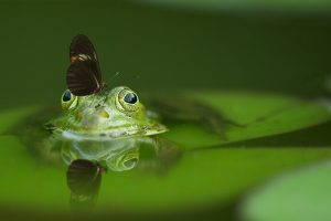 A frog with a butterfly on his head.