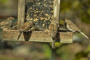 Create a wildlife haven in your garden with a bird feeder.