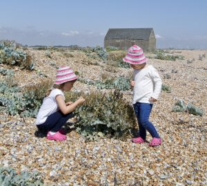 What's on this August: Rye Harbour Nature Reserve