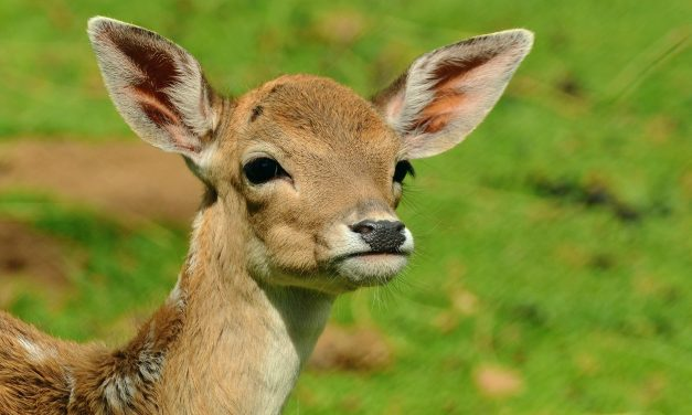 Are you deer aware?