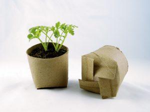 Cardboard seed pots