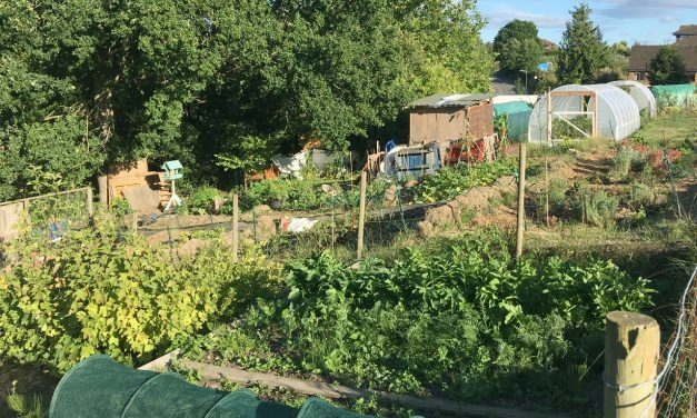 Grow your own veg – National Allotment Week