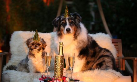 Celebrate New Year's eve safely